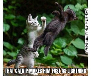animals, funny animals, and cat image
