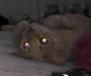 cat, dark, and aesthetic image