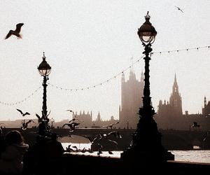england, beautiful, and birds image