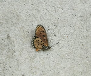alternative, butterfly, and photography image