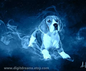 animals, dogs, and beagle image