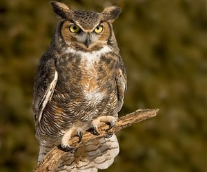 animals, harry potter, and owl image