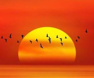 птицы, закат, and красиво image