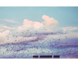birds, purple, and white image