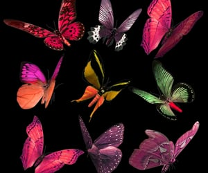 butterflies, butterfly, and png image