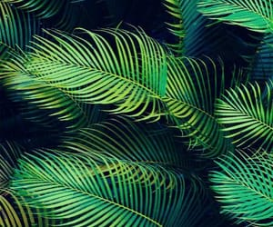 листья, зеленый, and растение image