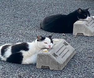 animals, cat, and ayuda image