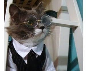 animals, fashion, and glasses image