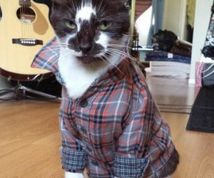 animals, fashion, and pets image