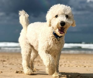 animals, dogs, and beachday image
