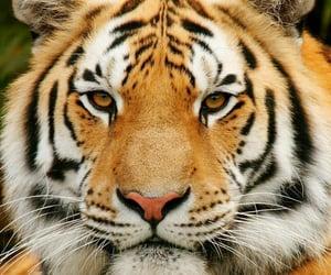 Animales, naturaleza, and animals image
