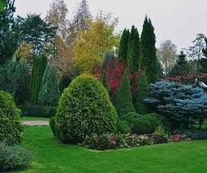 backyard, blue, and green image