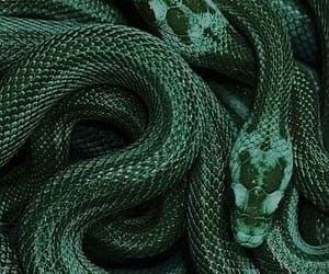 snake, harry potter, and slytherin image