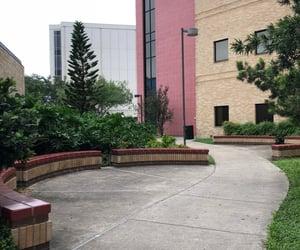campus, college, and campus life image