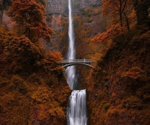 autumn, pinterest, and fall image