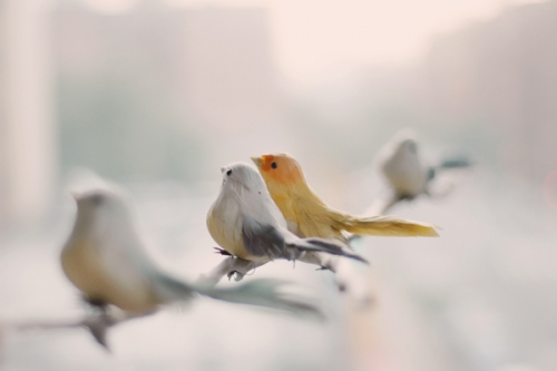 bird, animal, and cute image