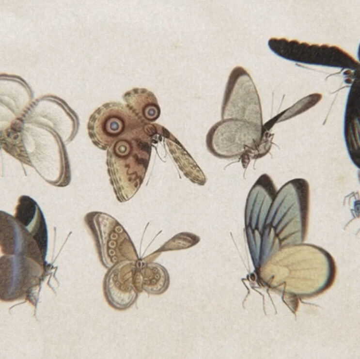 archive, butterflies, and soft image