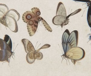 archive, soft, and butterflies image