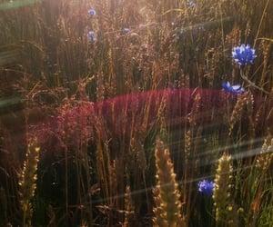 aesthetics, inspiration, and nature image