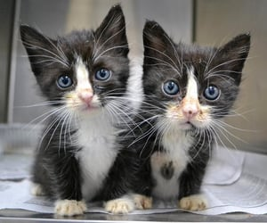 kitten, cat, and cute image