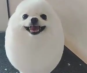 adorable, fluffy, and pet image