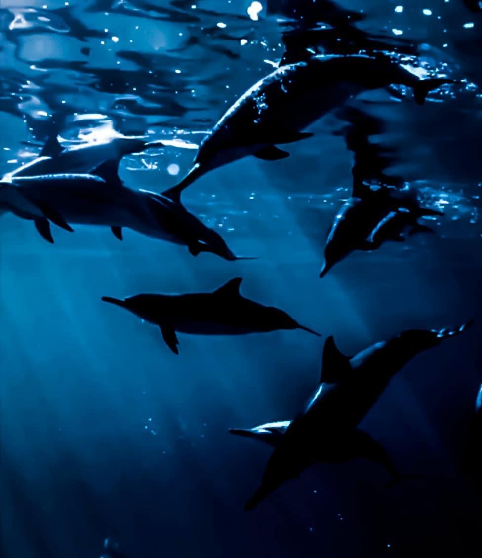 animals, blue, and dark blue image
