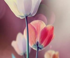 фон, красиво, and цветы image