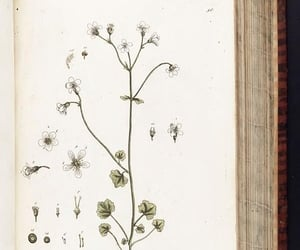 herbals, #womeninscience, and early works to 1800 image