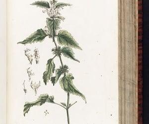 #hernaturalhistory, botany, medical, and herbals image