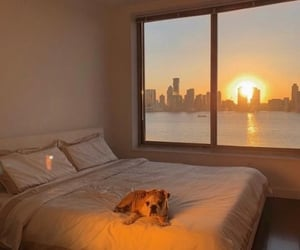 dog, sunset, and bed image