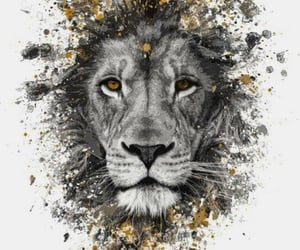 animal, lion, and wallpaper image