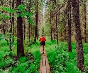fitness, forest, and nature image