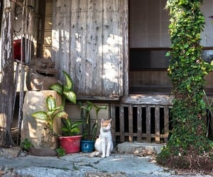 cabin, cats, and korea image
