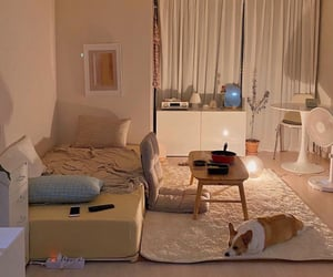 bed, dog, and night image