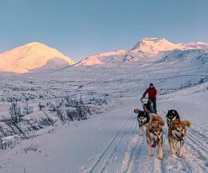 dogs, sledge, and dogmushing image