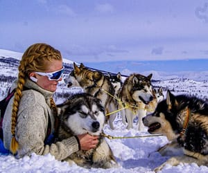 artic, dogs, and sledge image