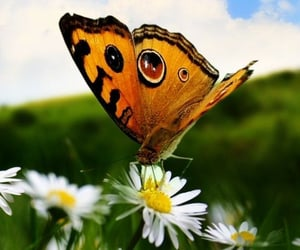 Animales, belleza, and butterfly image