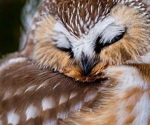 animal, bird, and owl image