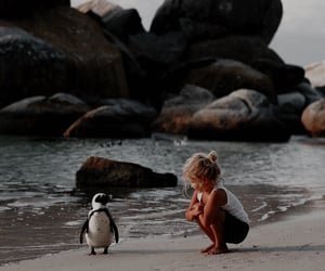 beach, penguin, and cute image
