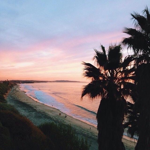 beach and palm image