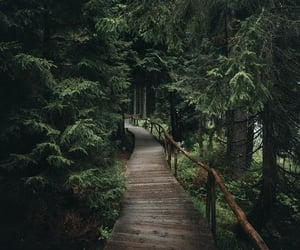 forest, bridge, and adventure image