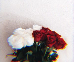 art, art photography, and red roses image