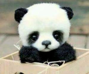 I LUV PANDA