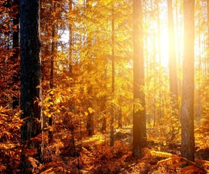 amazing, sunlight, and autumn image
