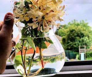 belgium, flowers, and location image