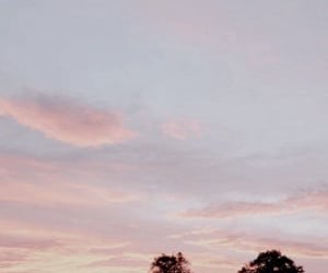 photography, trees, and pink sky image