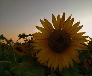 beautiful place, sunflower, and moldova image