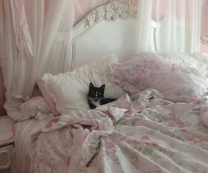 cat, bed, and pink image