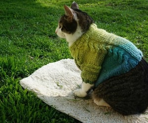 animals, cat, and cats in clothes image