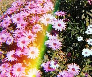 arcoiris, primavera, and white image